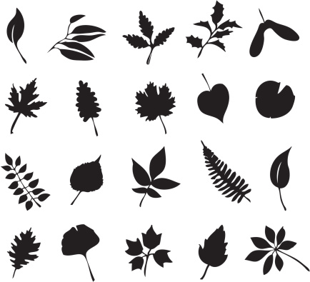 Study of leaves
