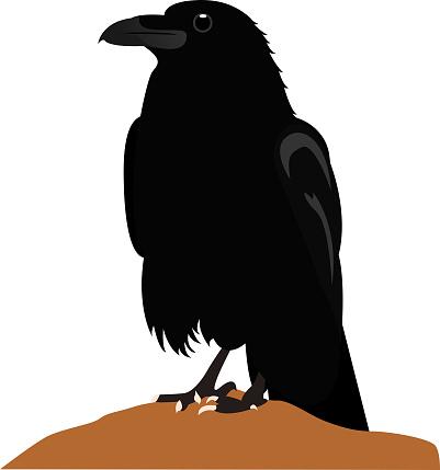 Stunning raven looking to the horizon