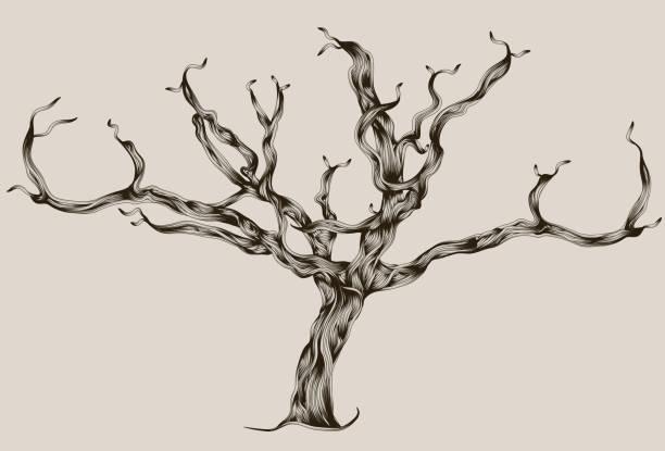 illustrations, cliparts, dessins animés et icônes de superbes illustrations réalisées à la main arbre mort - arbres généalogiques
