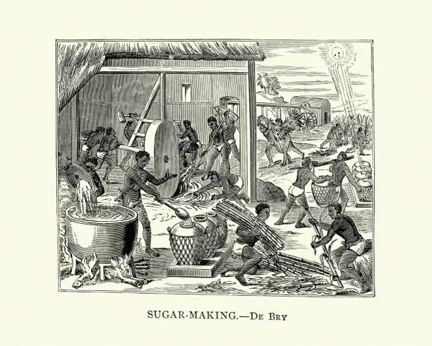 illustrazioni stock, clip art, cartoni animati e icone di tendenza di sugar making in cuba, 16th century - zuccherificio