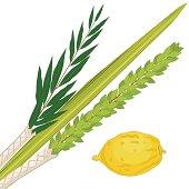 istock Sukkoth Plants 167590193