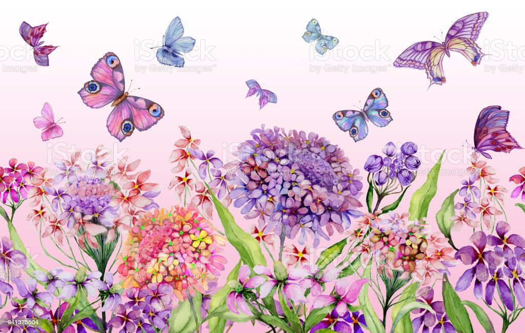 Summer Background Beautiful Vivid Iberis Flowers And Colorful