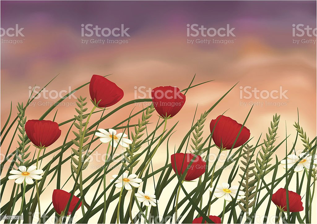 Summer evening meadow royalty-free stock vector art