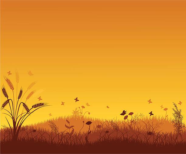 ilustraciones, imágenes clip art, dibujos animados e iconos de stock de paisaje de verano - straw field