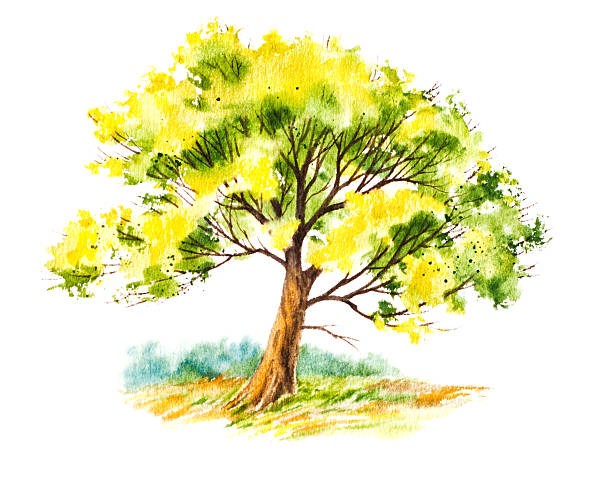 Summer Tree With Foliage vector art illustration