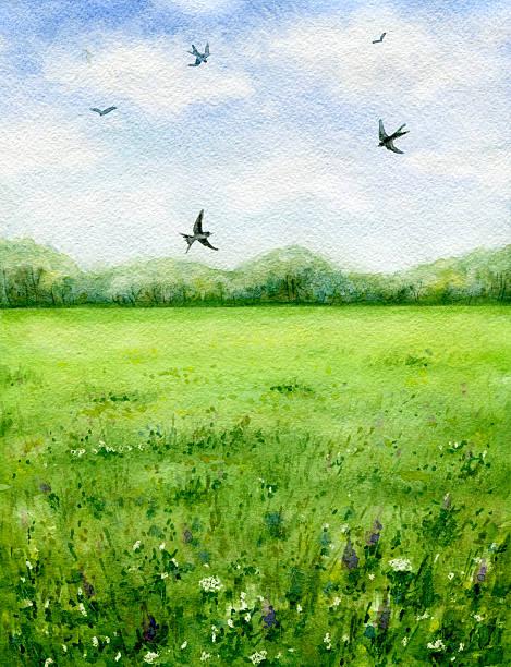 サマーの眺め緑の牧草地と飛ぶ鳥ます。 - 草原点のイラスト素材/クリップアート素材/マンガ素材/アイコン素材