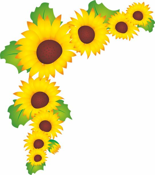 Top 60 Sunflower Border Clip Art Clip Art, Vector Graphics ...