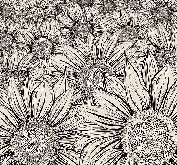 Sunflower field vector art illustration