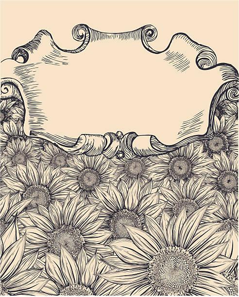 Sunflower field with vintage banner vector art illustration