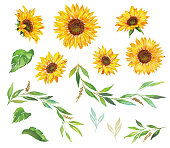 vector sunflower seeds head flower frame border