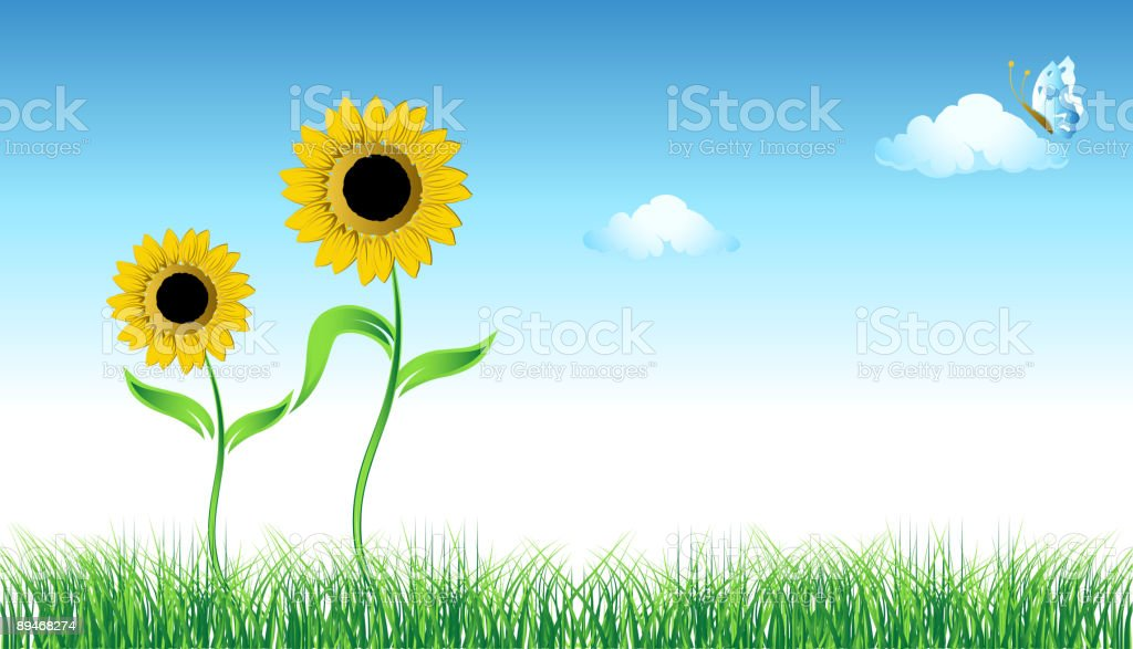 Sunflower on green field royalty-free sunflower on green field stock vector art & more images of backgrounds
