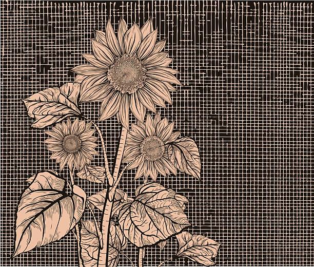 Sunflower. Sepia vector art illustration
