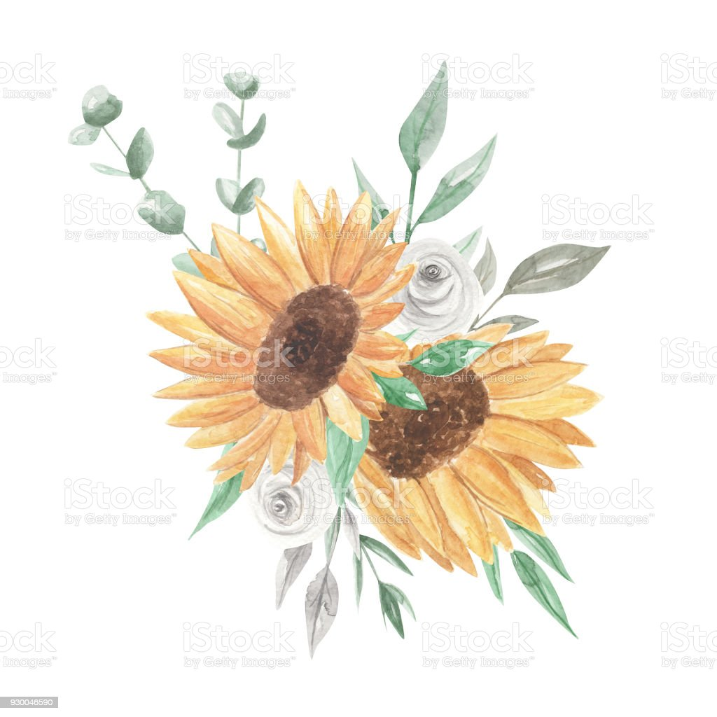 Sunflower Watercolor Bouquets Clipart Flowers White Roses Stock ...