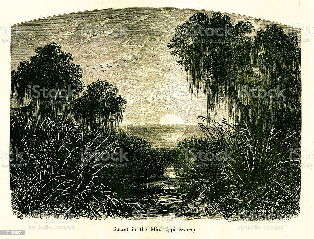 Sunset in Mississippi Swamp, USA vector art illustration