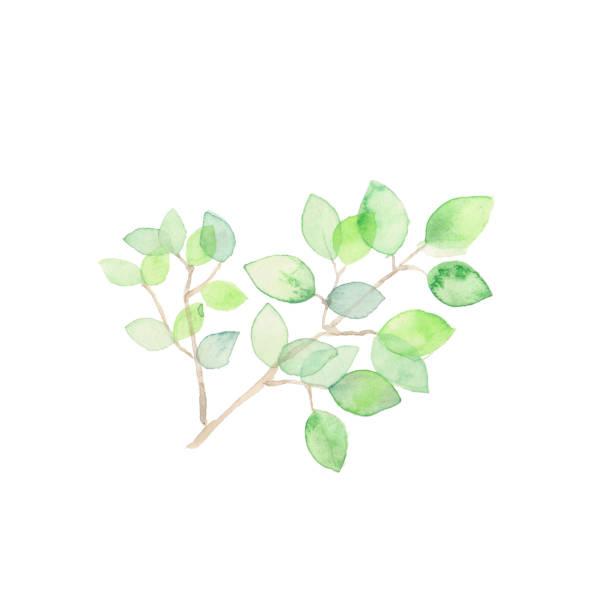 illustrazioni stock, clip art, cartoni animati e icone di tendenza di sunshine filtering through foliage - forest bathing