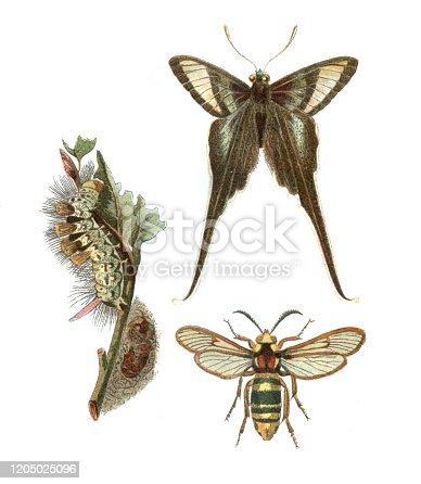 istock Swallowtail butterfly hornet moth illustration 1205025096