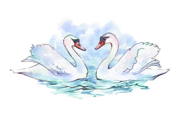 ilustrações de stock, clip art, desenhos animados e ícones de swans on blue lake water watercolor - bills couple