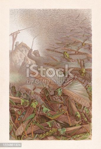 Swarm of grasshoppers (Migratory locust). Chromolithograph, published in 1884.