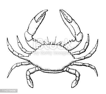 Illustration of a  swimming crab that breathes only in water