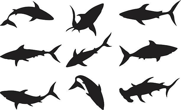 Swimming sharks Swimming sharks animal fin stock illustrations