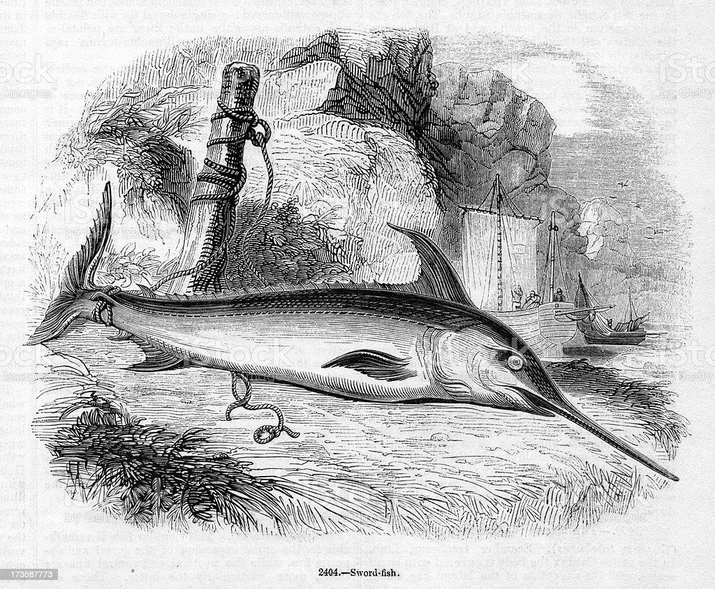Swordfish vector art illustration