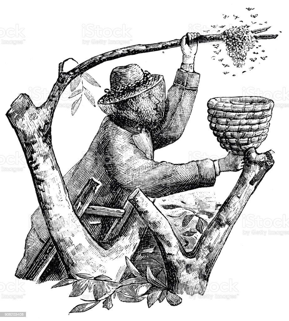 Lettre symbolique W et un apiculteur avec panier - Illustration vectorielle