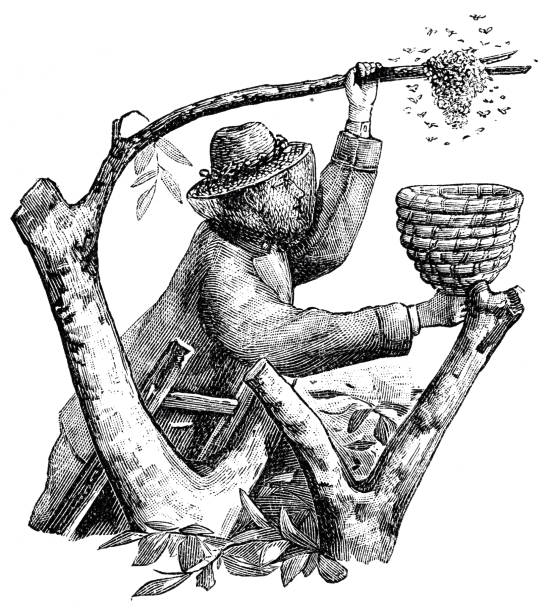 Symbolic letter W and a beekeeper with basket Illustration from 19th century beekeeper stock illustrations