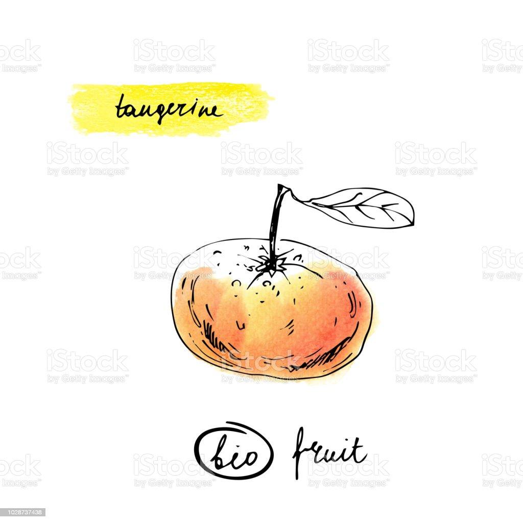 Mandarine Zeichnen Mit Schriftzug Namen In Gelb Und Orange Farben