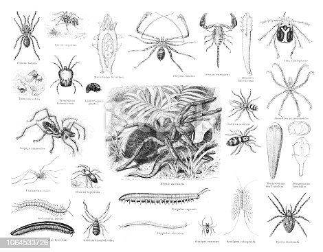Steel engraving spider and insects Original edition from my own archives Source : Brockhaus Conversationslexikon 1887