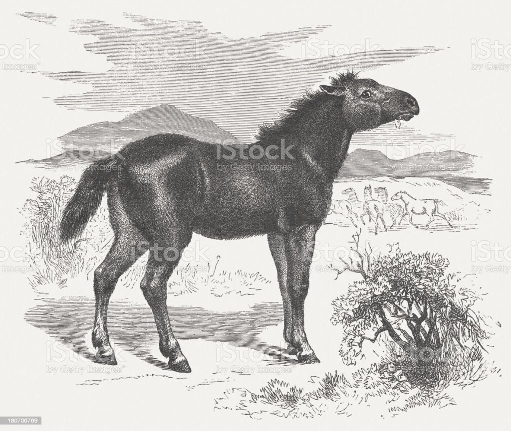 Tarpan (Equus ferus ferus), wood engraving, published in 1875 vector art illustration
