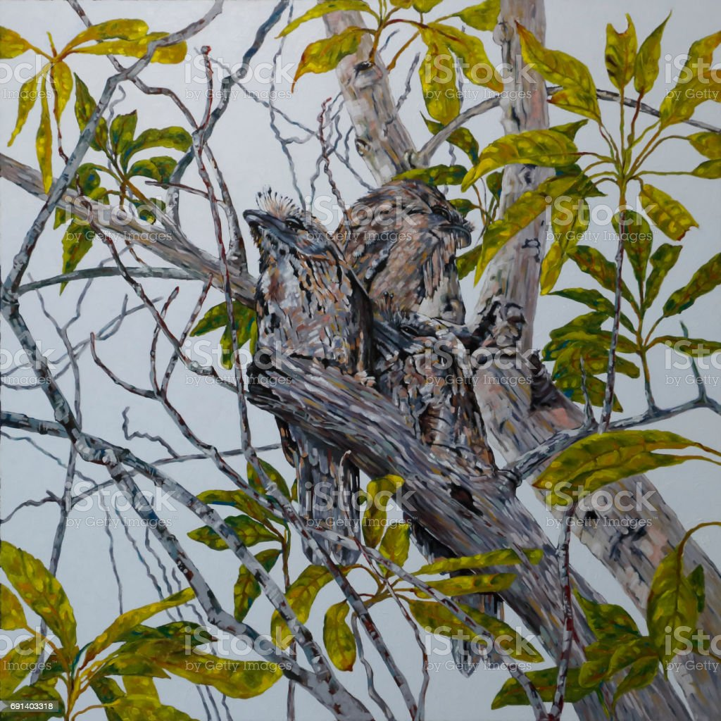 Tawny Frogmouth Family in an Avocado Tree Original Art vector art illustration