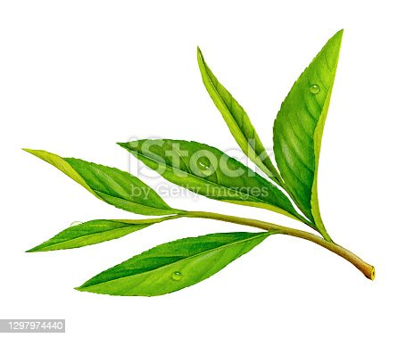 istock Tea Leaves 1297974440