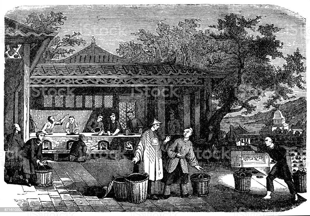 Tea plantation in Japan vector art illustration