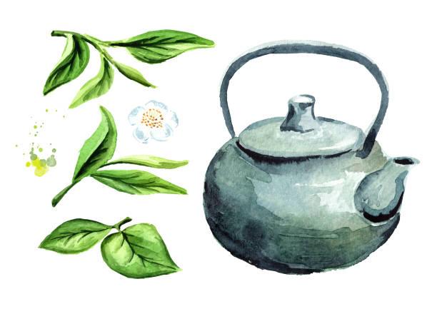 緑茶と紅茶のポットの葉セット。水彩の手描きイラスト、白い背景で隔離 - 抹茶点のイラスト素材/クリップアート素材/マンガ素材/アイコン素材