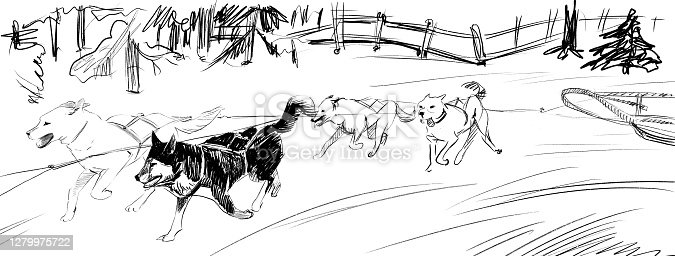istock Team of sled dogs pencil sketch 1279975722