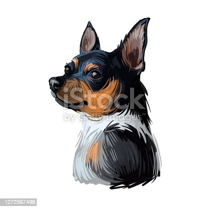 istock Teddy Roosevelt Terrier American hunting breed. Feist Bull-terrier, Smooth Fox Manchester Whippet, Italian Greyhound, Turnspit Dog, Wry-legged. Digital art illustration. Animal watercolor portrait. 1272567498