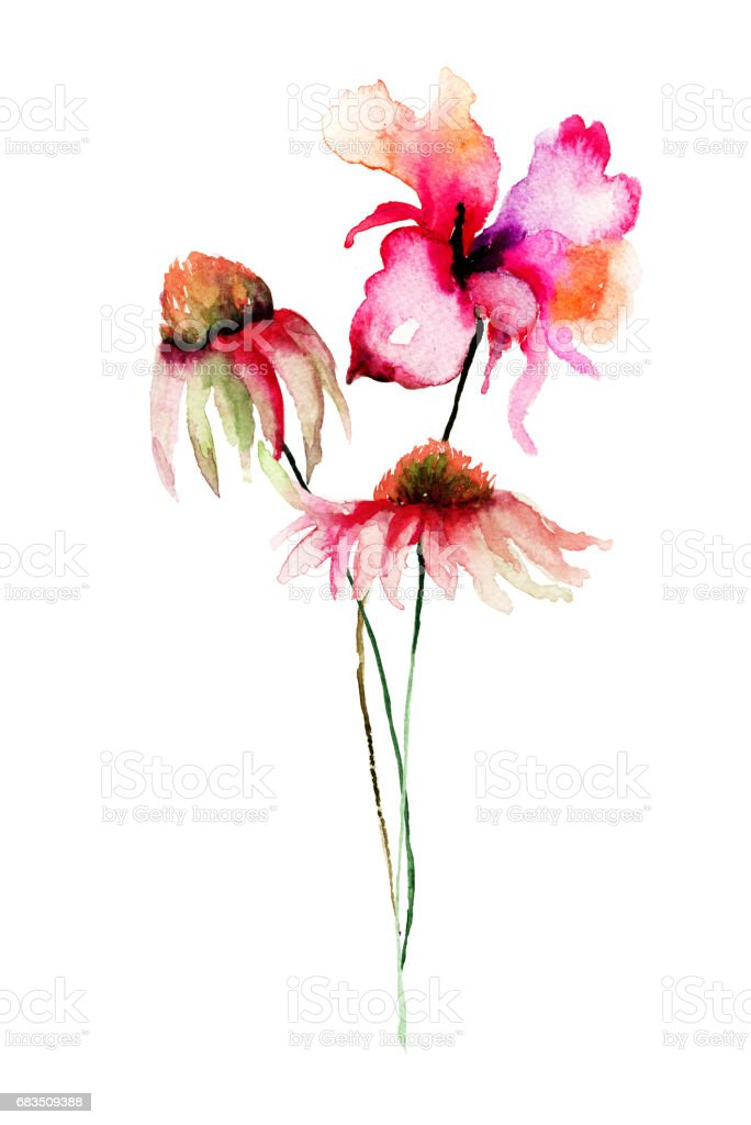 Template for card with gerber and poppy flowers stock vector art template for card with gerber and poppy flowers royalty free template for card with gerber mightylinksfo