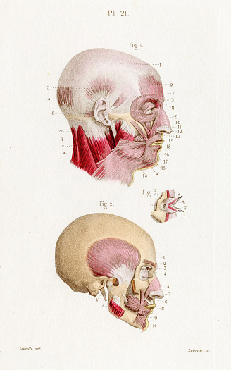 Temporal muscle anatomy engraving 1886
