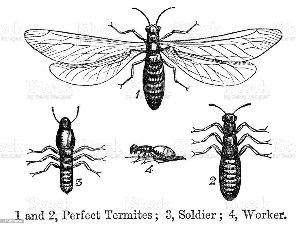 Termites royalty-free stock vector art