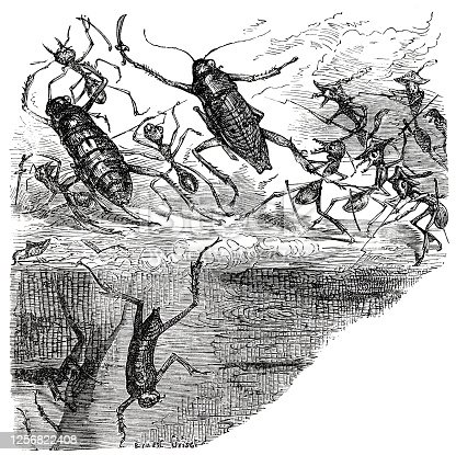 istock The ants warriors dashing in 1256822408