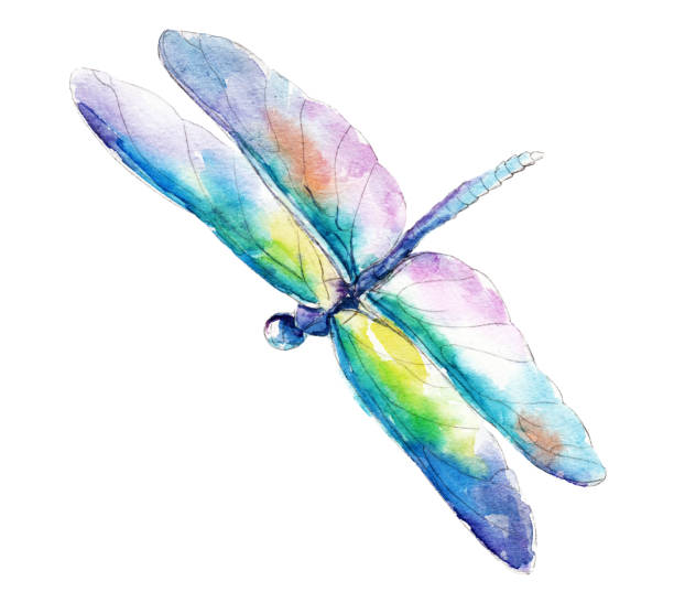 Best Dragonfly Illustrations, Royalty-Free Vector Graphics ...