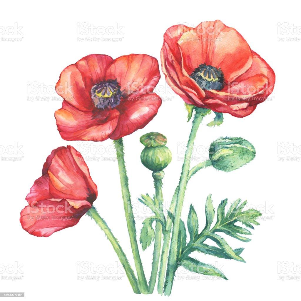 Der Blumenstrauß Blüte Rote Mohnblumen Blumen Aquarell
