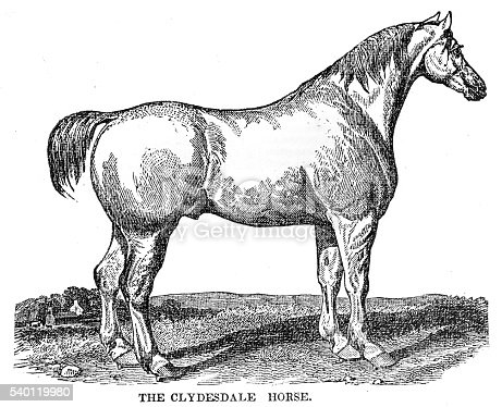 The Clydesdale horse 1841