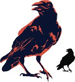 Crow illustration and silhouette.
