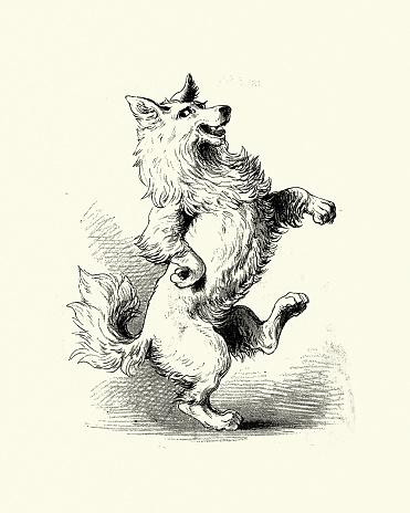 The Dog danced a jig