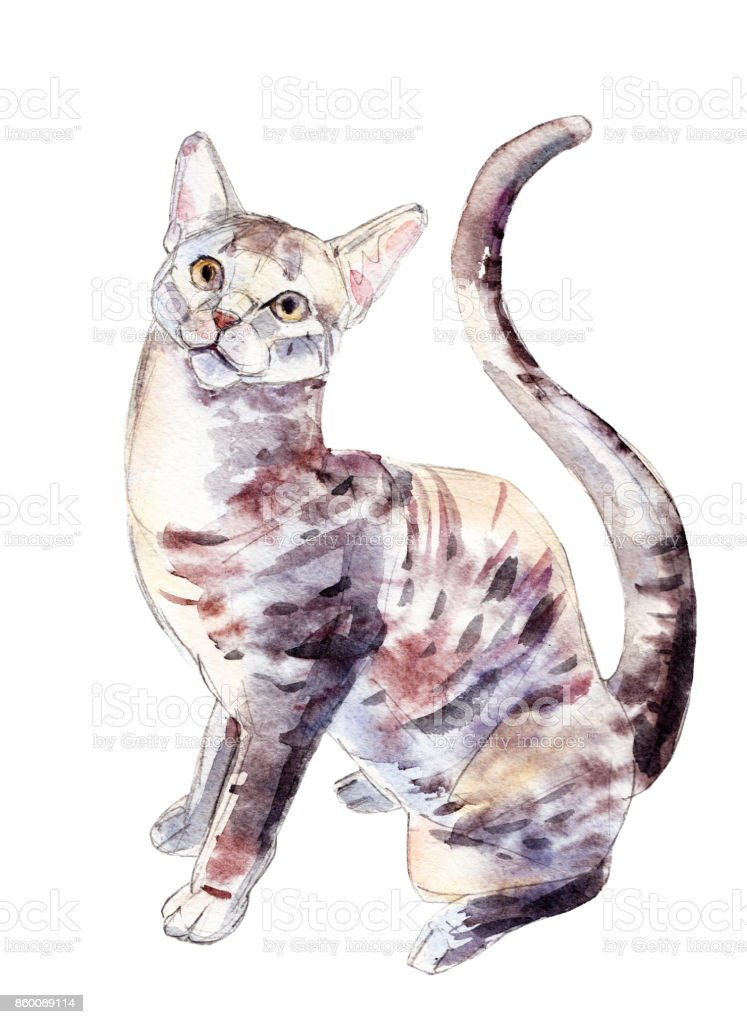 The egyptian mau cat, watercolor illustration isolated on white background. vector art illustration