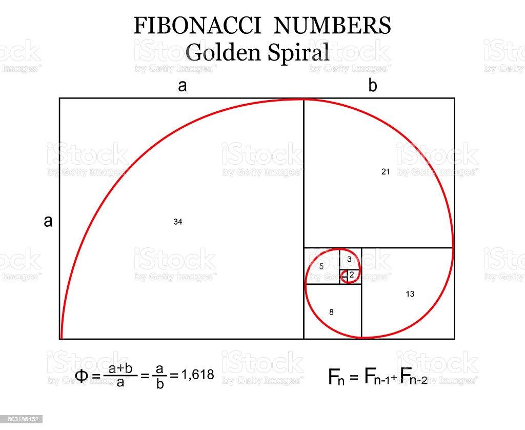 The Fibonacci spiral vector art illustration
