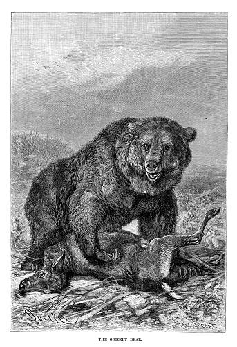 The Royal Natural History 1896