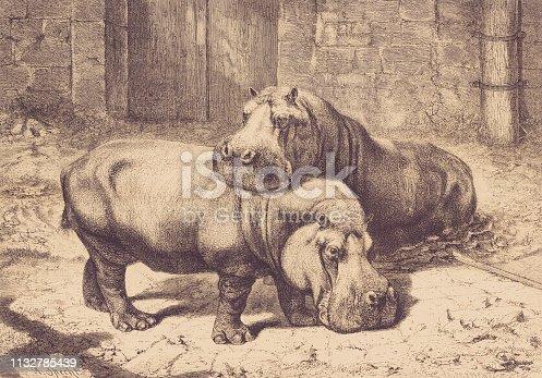 history, vintage, illustration, retro style,  19th Century Style, old, Hippo, Zoo, Amsterdam