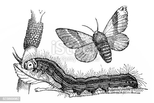 istock The lackey moth (Malacosoma neustria) 523869982